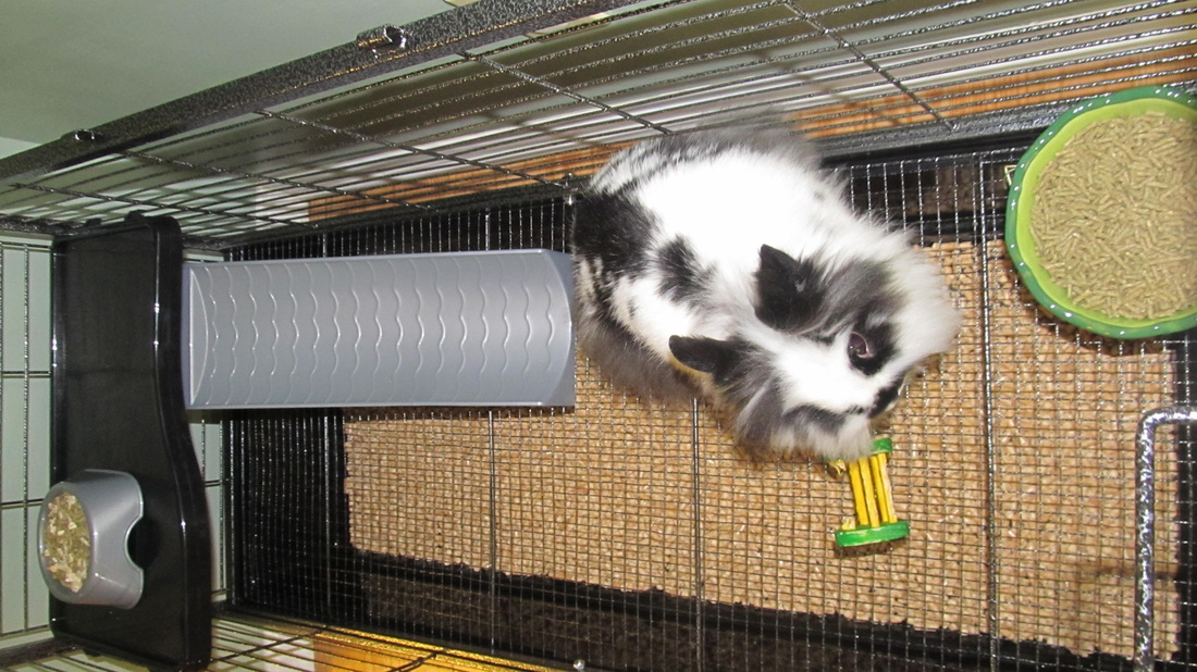how to keep your rabbit cage clean